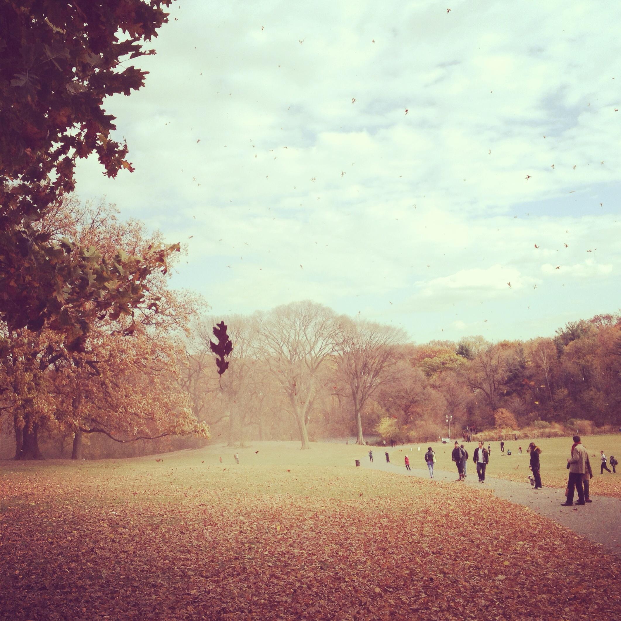 prospect park leaves falling